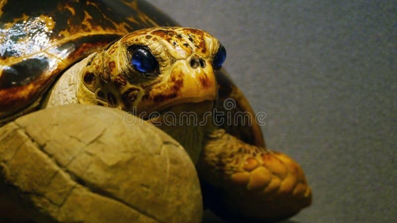 Nätt sköldpadda royaltyfria bilder