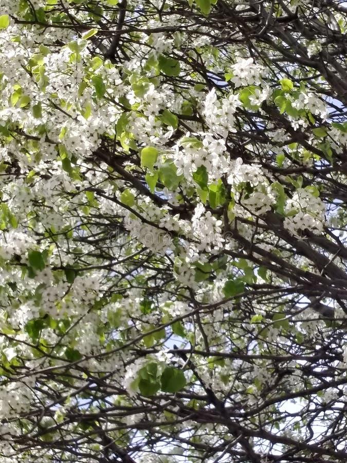 Nätt träd för blomma royaltyfri bild
