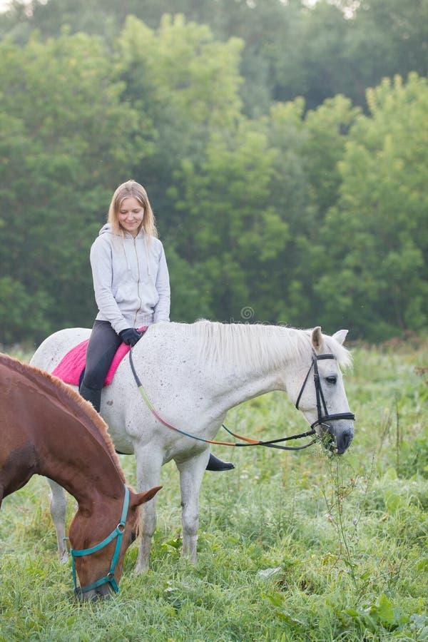 Nätt ung kvinna på ett stag för vit häst på ett fält fotografering för bildbyråer