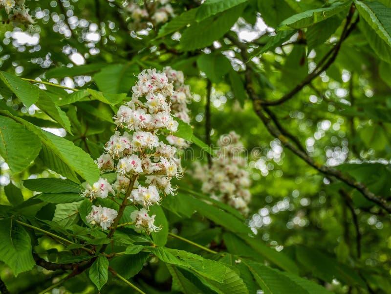 Nätt vit blomning i träd royaltyfria bilder