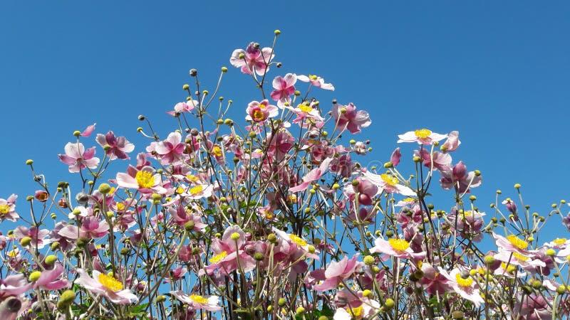 Nätta blommor på sommarferie royaltyfria foton