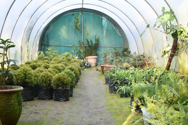 Nätta dekorativa växter som odlas i blomkrukor i en drivhus på en barnkammare eller en lantgård för detaljhandel som hus eller tr royaltyfri fotografi