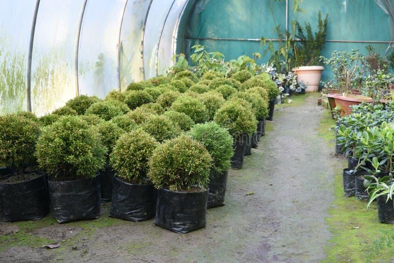 Nätta dekorativa växter som odlas i blomkrukor i en drivhus på en barnkammare eller en lantgård för detaljhandel som hus eller tr arkivfoton