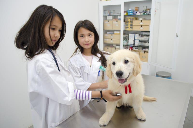 Nätta flickor som låtsar för att vara veterinärer royaltyfri bild
