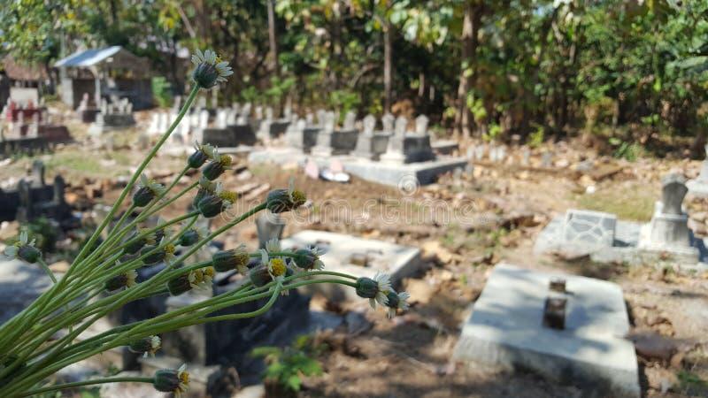 Någon grupp av blommor överst av gravvalvet arkivbild