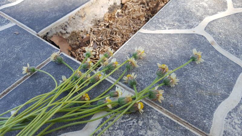 Någon grupp av blommor överst av gravvalvet royaltyfria bilder