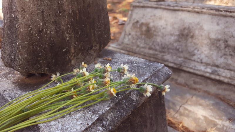 Någon grupp av blommor överst av gravvalvet fotografering för bildbyråer
