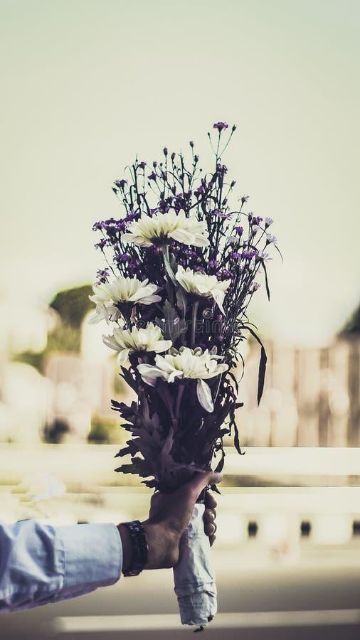 Någon som rymmer en bukett av blomman för vit tusensköna för en överraskning royaltyfria foton