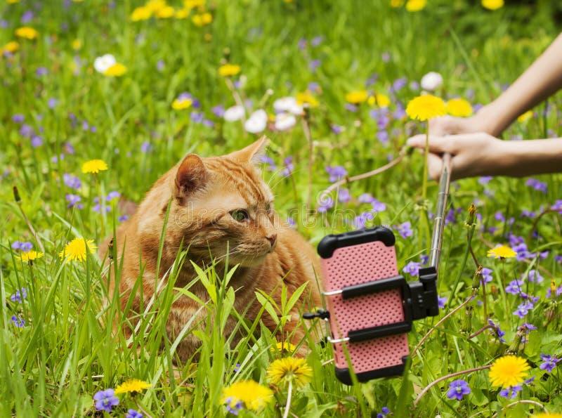 Någon som tar en bild av den röda katten royaltyfri bild