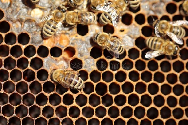 Något arbeta för honungbin royaltyfri fotografi