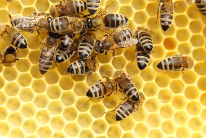 Några bin tar honung royaltyfri fotografi