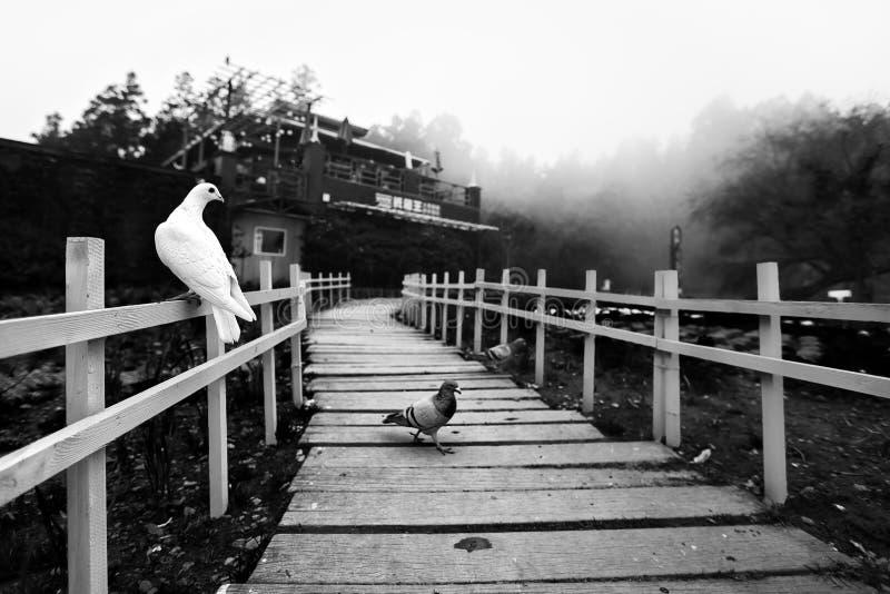 Några fåglar i lokal trädgård av Taiwan arkivfoto