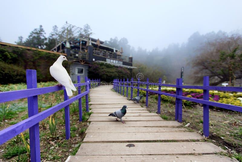 Några fåglar i lokal trädgård av Taiwan royaltyfri foto