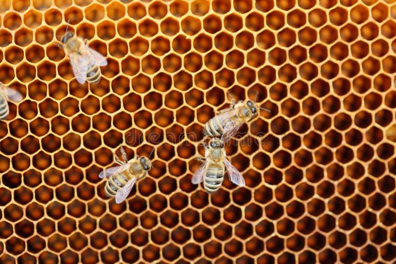 Några honungbin arkivfoton