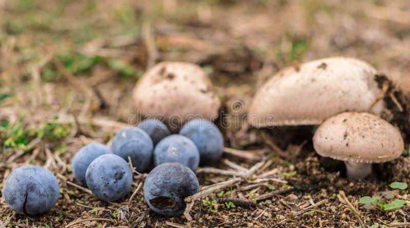 Några lösa champinjoner och bär i skogen arkivfoton