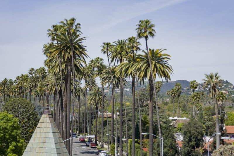 Några palmträd på Beverly Hills royaltyfria bilder
