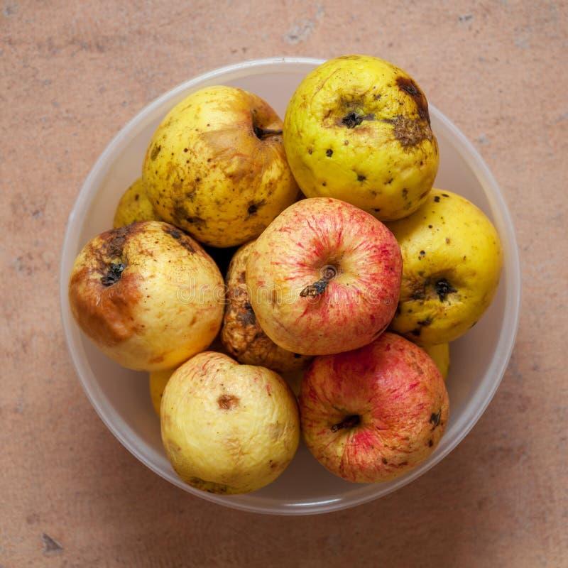 Några röd-guling övermogna äpplen i en rund bunke royaltyfria foton
