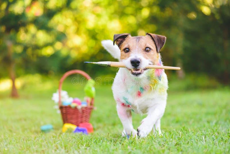 Når målning och att ha färgat den blivna hunden för påskägg befläckt med målarfärg arkivbilder