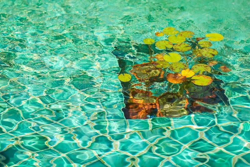 Nénuphars dans la fontaine avec de l'eau transparent turquoise images stock