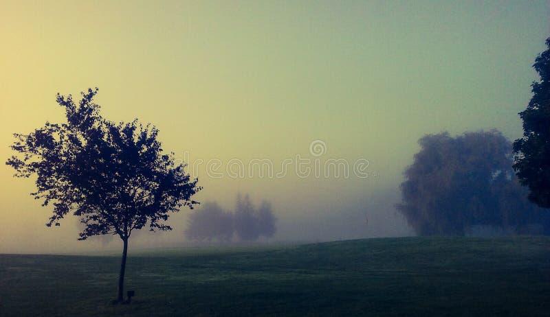Download Névoa foto de stock. Imagem de árvore, golf, manhã, curso - 80102370