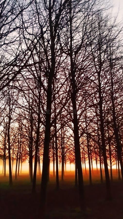 Névoa atrasada da floresta do outono foto de stock royalty free