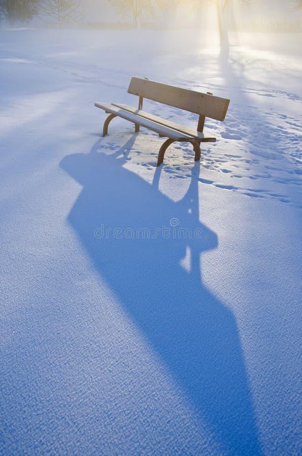Névoa bonita da manhã do inverno no parque e na luz solar fotografia de stock