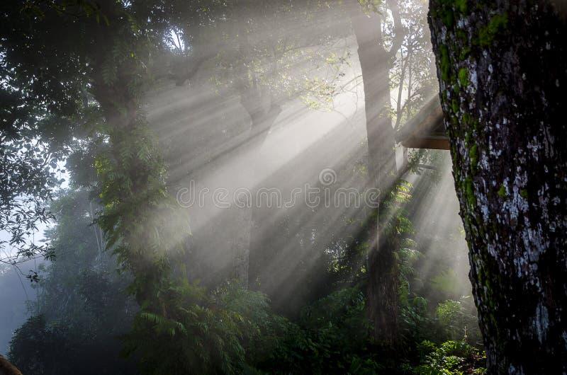 Névoa bonita na floresta com configuração da luz imagem de stock