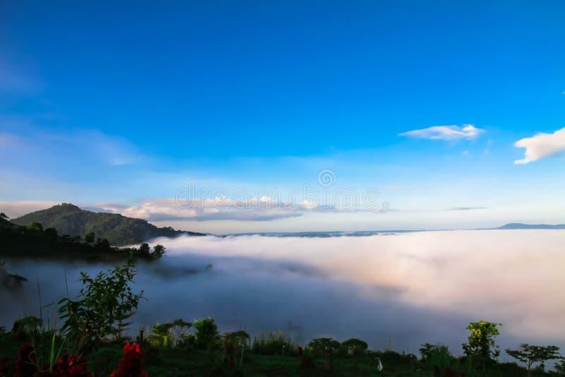 A névoa branca bate a luz do sol bonita da manhã no inverno foto de stock royalty free