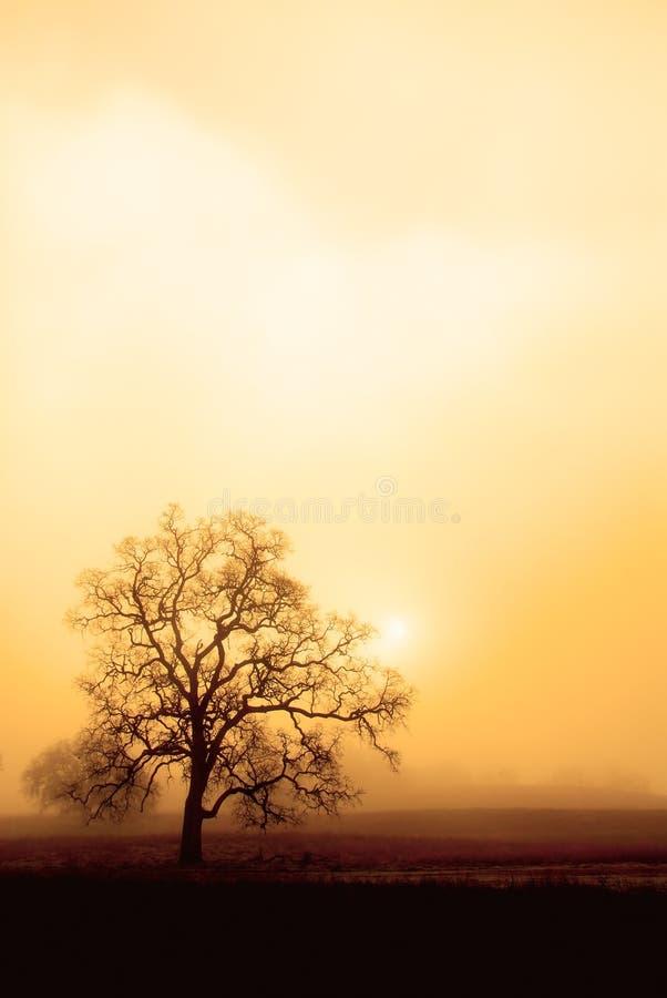 Névoa, carvalho e Sun no Sepia imagem de stock