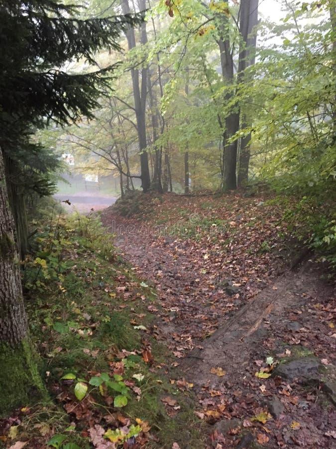 Névoa chuvosa da névoa da árvore das árvores das folhas de outono da floresta foto de stock royalty free