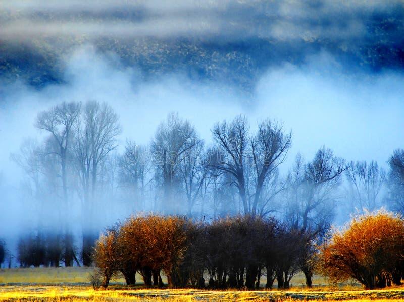 Névoa com árvores e arbustos foto de stock royalty free