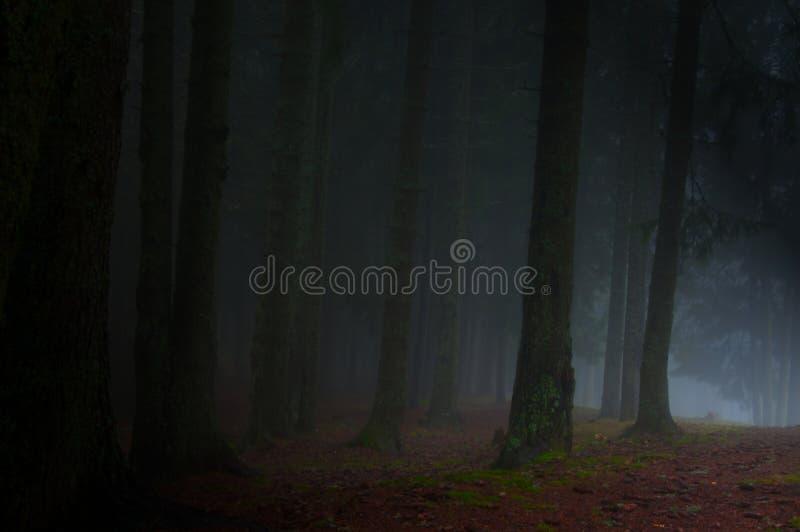 Névoa da floresta foto de stock
