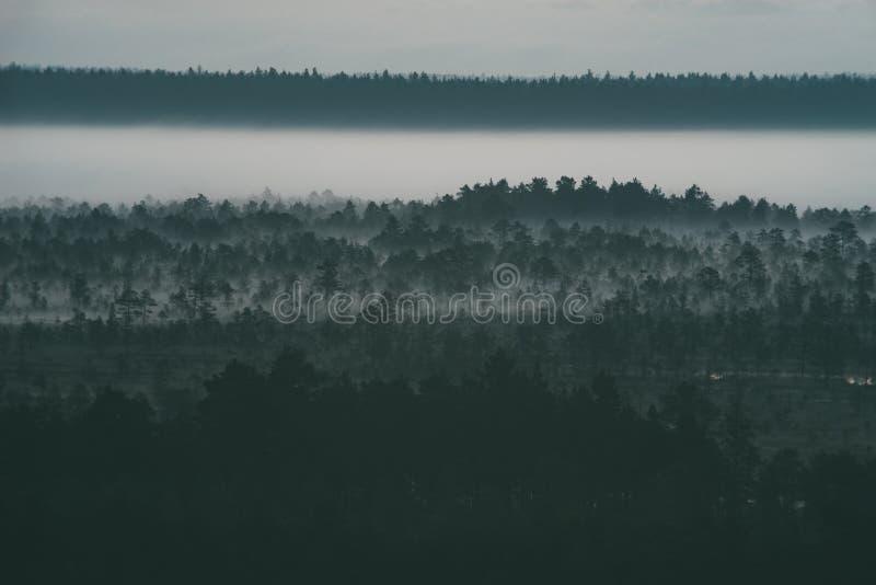 A névoa da manhã atrasa-se sobre o pântano imagem de stock royalty free