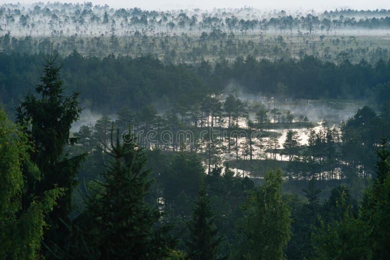 A névoa da manhã atrasa-se sobre o pântano foto de stock royalty free