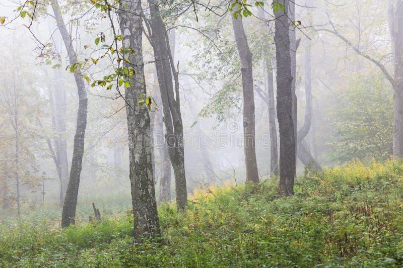 Névoa da manhã na floresta fotografia de stock