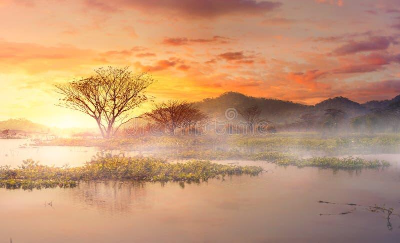 A névoa da manhã no lago do th a árvore na parte traseira da água e da montanha com céu bonito fotos de stock royalty free