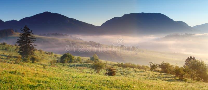 Névoa da manhã sobre o prado imagem de stock royalty free