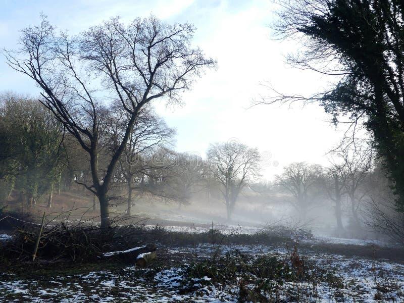 Névoa do amanhecer do inverno na terra comum de Chorleywood, Hertfordshire imagens de stock royalty free