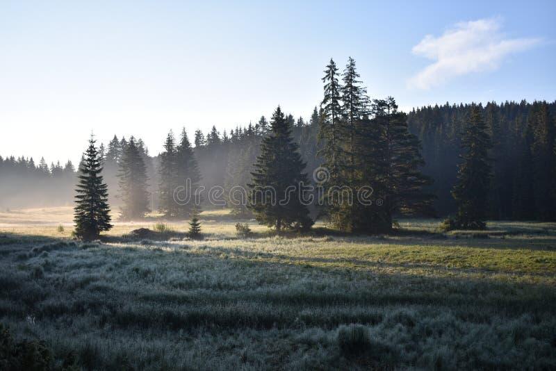 A névoa do amanhecer, prado e a floresta fotografia de stock