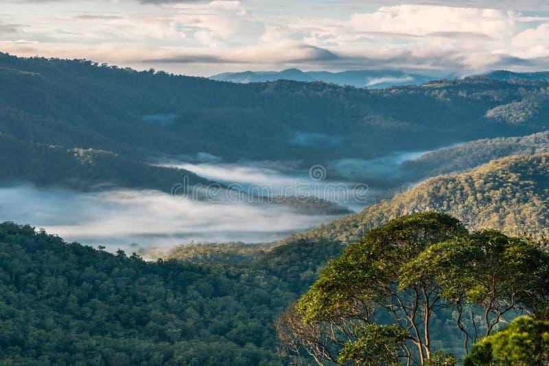 Névoa do amanhecer sobre a floresta úmida tropical no parque nacional de Tamborine imagens de stock royalty free