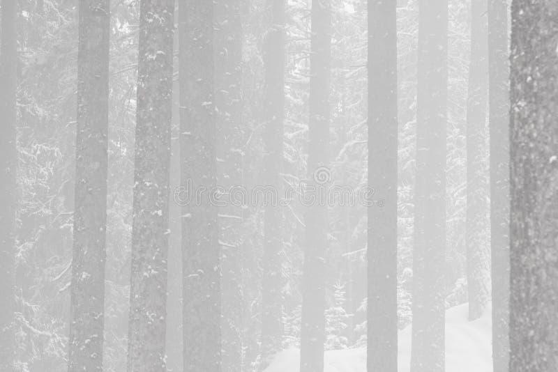 Névoa do inverno em uma floresta fotografia de stock royalty free