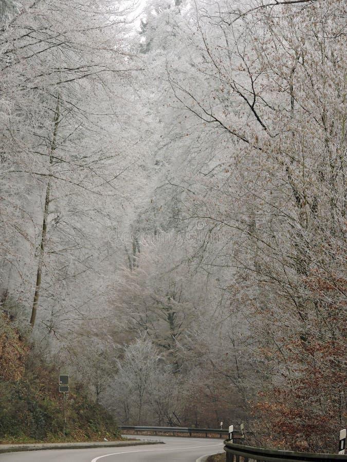 Névoa do inverno em uma floresta com as árvores altas em Alemanha Orvalho geado na madeira durante um fim de semana frio fotos de stock royalty free