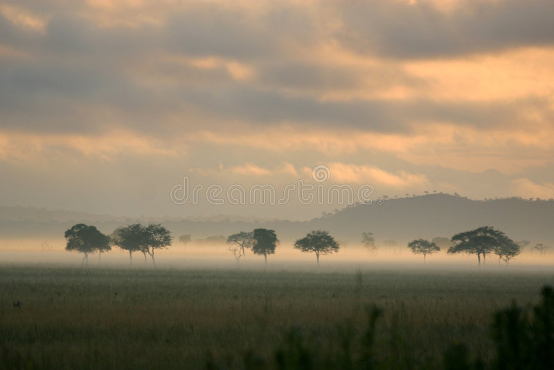 Névoa do nascer do sol nas planícies africanas fotografia de stock