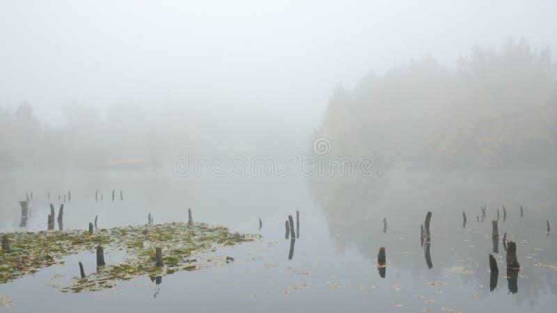 Névoa do outono no lago fotografia de stock royalty free