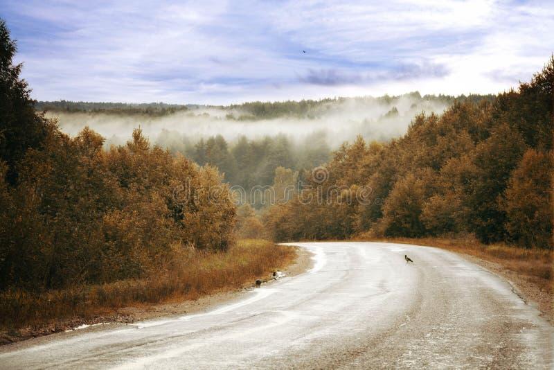 Névoa dourada da floresta do outono da estrada imagem de stock