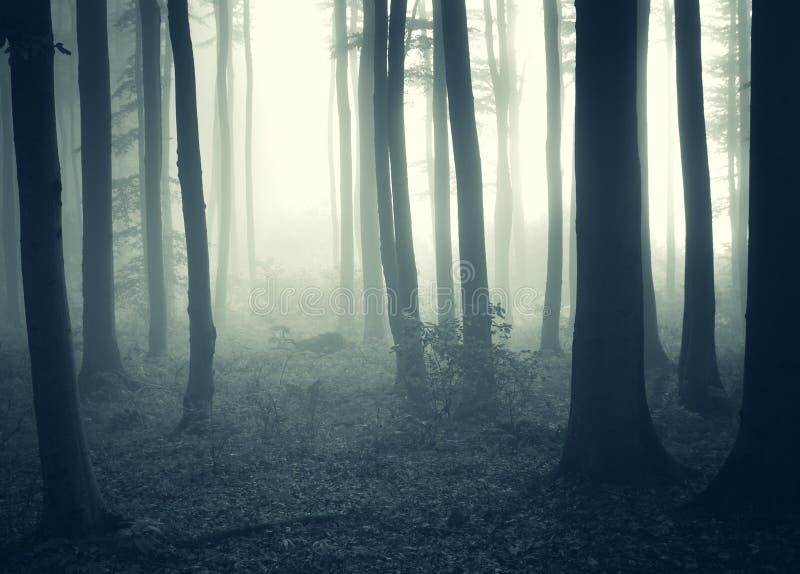 Névoa e luz em uma floresta misteriosa escura imagens de stock