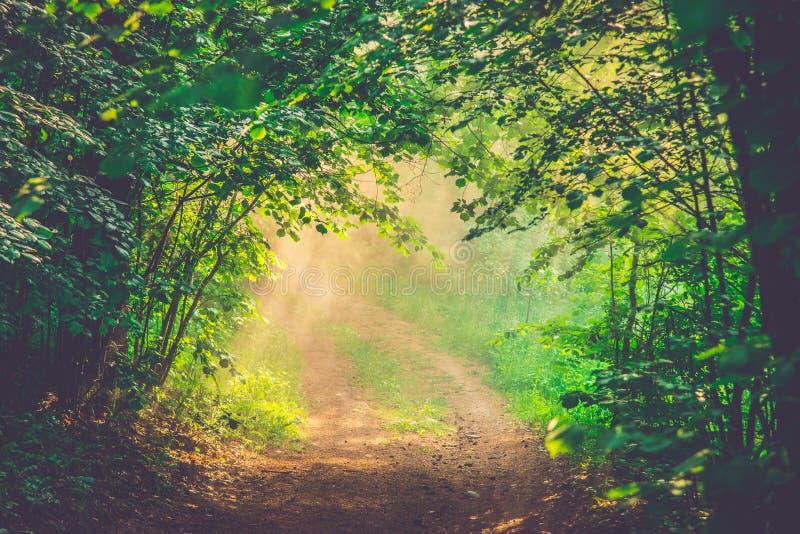 Névoa e primeira luz da manhã na floresta fotografia de stock