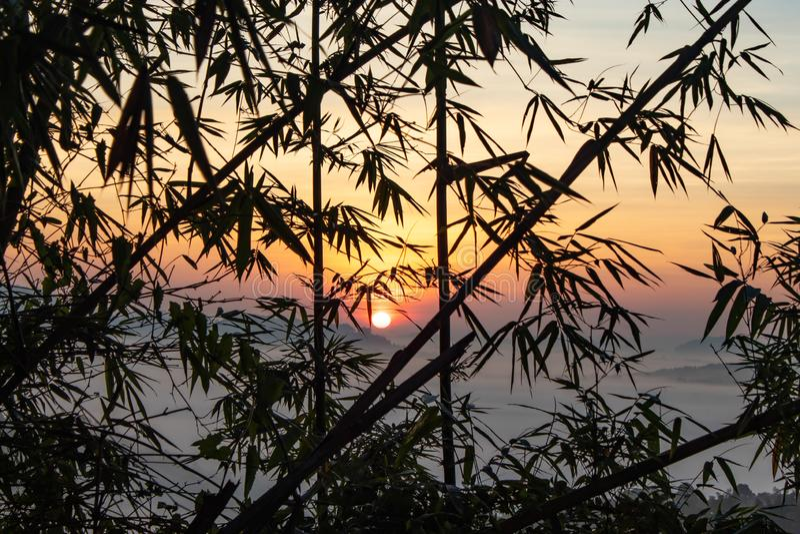Névoa e Sun atrás das árvores de bambu foto de stock royalty free