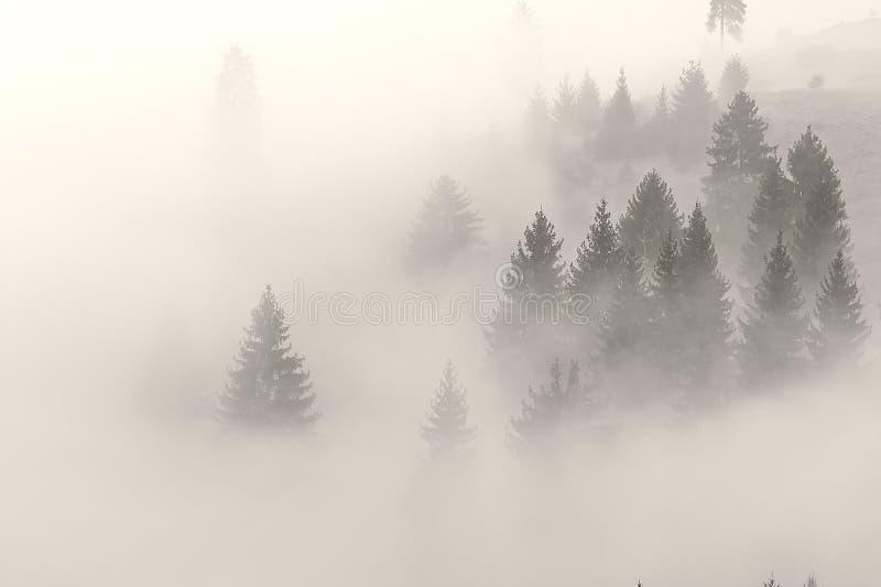 A névoa está escalando no monte antes do nascer do sol fotografia de stock