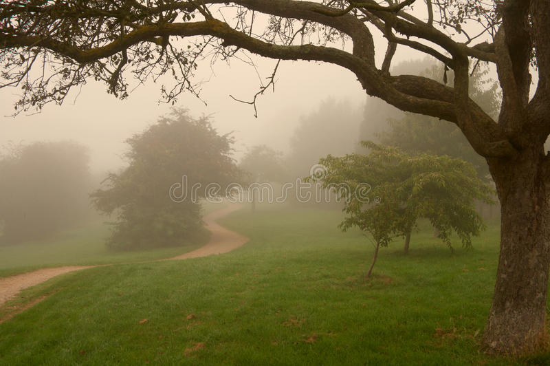 Névoa inglesa em um parque, luz morna da manhã fotografia de stock royalty free